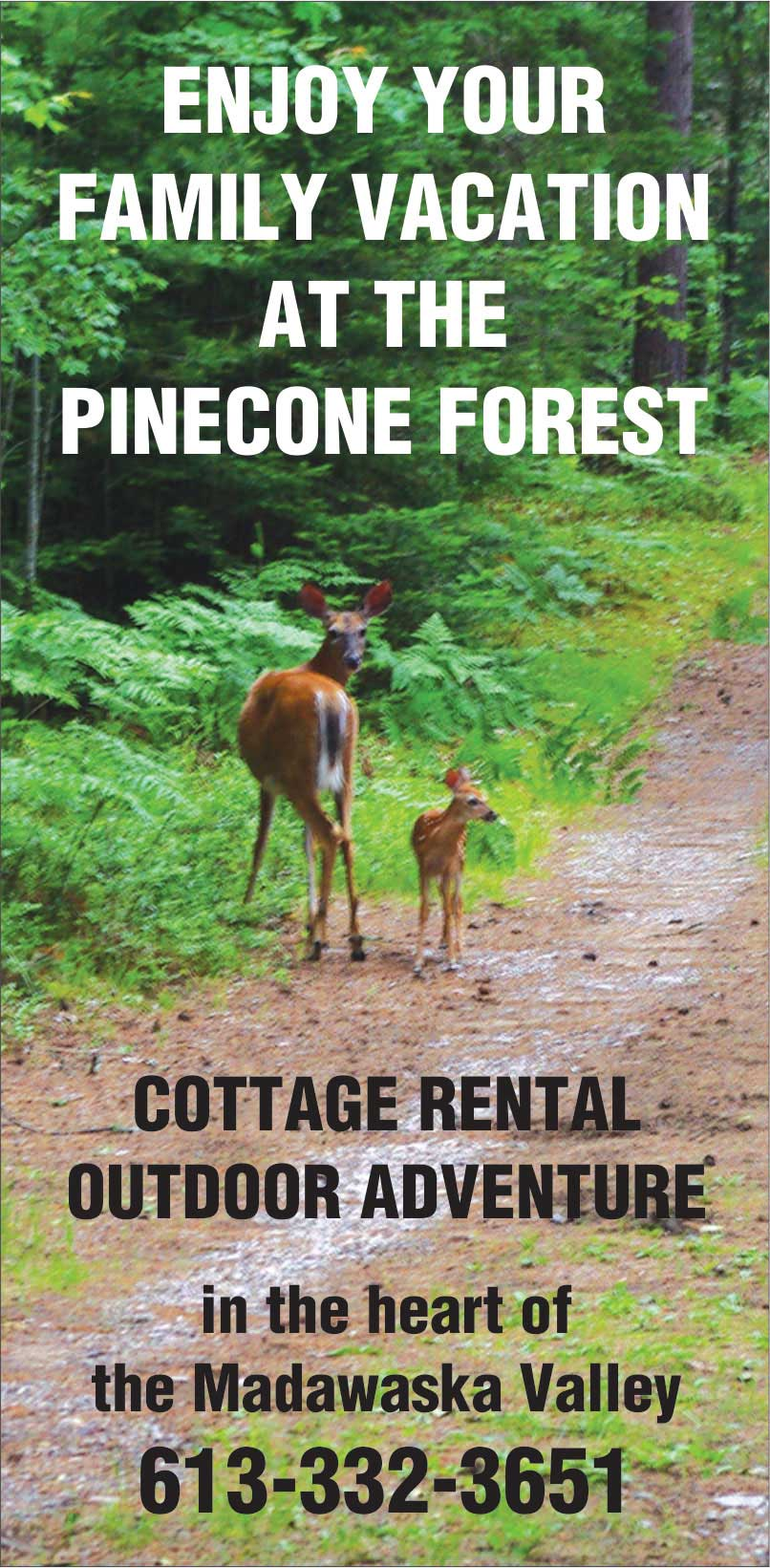 Enjoy Your Family Vacation at The Pinecone Forest--Cottage Rental and Outdoor Recreation